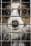 Dog in a cage. Closeup of a dog looking through the bars of a cage Royalty Free Stock Image