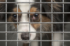 Dog in a cage Royalty Free Stock Images