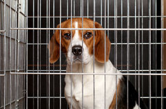 Dog in a cage royalty free stock photo