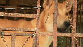 Dog in cage stock video footage