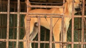 Dog in cage stock video