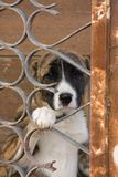 Dog in cage. Dog in rusty cage looking for help Royalty Free Stock Image