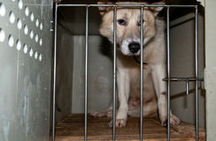 Dog in the cage. Sad  and lonely dog in the cage Stock Photography