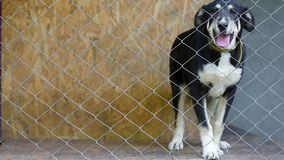 Dog in cage at animal shelter. Dog in his cage at animal shelter waiting to be adopted. Lonely puppy in aviary stock video footage