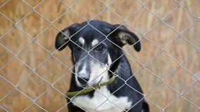 Dog in cage at animal shelter. Sad dog in his cage at animal shelter waiting to be adopted. Lonely puppy in aviary stock footage