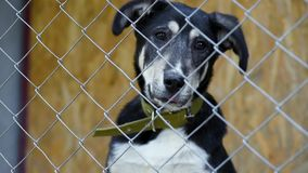 Dog in cage at animal shelter stock video footage