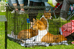 Dog in cage Stock Photos