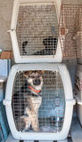 Dog Cage. Captured stray dog in a cage Stock Photography