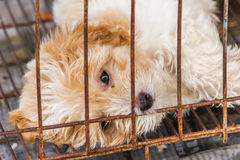 Dog in cage. Closeup lonely dog in cage Stock Photo