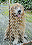 Dog in cage Royalty Free Stock Image