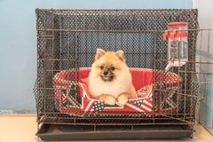 Dog in cage. At home area Stock Image