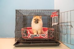 Dog in cage. At home area Stock Photography