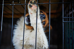 The dog in the cage Stock Photos