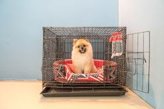 Dog in cage. At home area Royalty Free Stock Photo