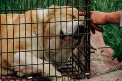 Dog in cage and man. Sad dog behind in a cage and a hand of man Royalty Free Stock Photos