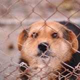Dog in cage. Portrait of dog in a cage Royalty Free Stock Photos