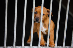 Dog in a cage. Dog with sad eyes in a cage behind bars Stock Images
