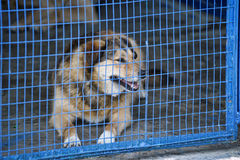 Dog in a cage Royalty Free Stock Photography