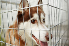 Dog in cage Royalty Free Stock Photos