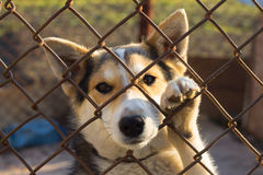 Dog in the cage. Small cute dog in the cage Royalty Free Stock Photo