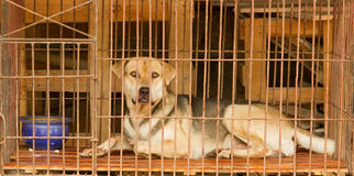 Dog in a cage in Vietnam Royalty Free Stock Image