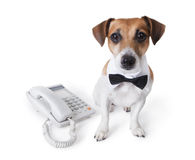 Dog Call center Stock Images