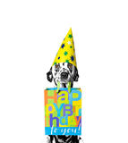 Dog came to someone's birthday. With a gift stock photo