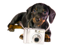 Dog with camera. Black dog Lays with a camera on white background isolated close up stock image