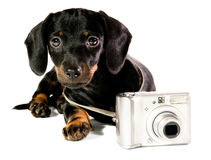 Dog with a camera. Black dog lie with a camera on white background, close up, look on camera royalty free stock images