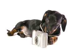 Dog with a camera. Black dog Lays with a camera on white background isolated close up stock photography