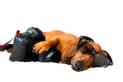 Dog with the camera Royalty Free Stock Photography