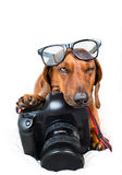 Dog with camera Royalty Free Stock Photo