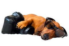Dog with camera Stock Images