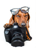 Dog with camera. Getting ready to take a picture royalty free stock image