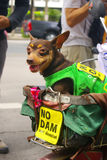 Dog with campaign sign for against the construction of a dam in Mae Wong National Park Stock Images