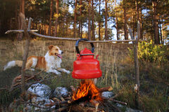 Dog and campfire. Dog near campfire with boiled tea in autumn forest royalty free stock image