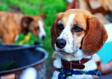 Dog camping Stock Photos
