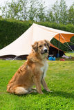 Dog at campsite Stock Photography