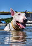 Dog Stock Photos