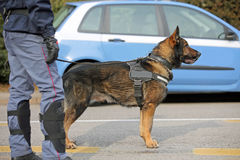 Dog Canine Unit of the police for the detection of explosive mat Royalty Free Stock Photography