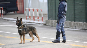 Dog Canine Unit of the police during the inspection of the area Royalty Free Stock Photos
