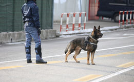 Dog Canine Unit of the police during the inspection of the area Stock Photo