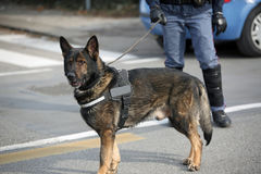 Dog Canine Unit of the police and a police officer in uniform du Stock Images