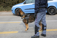 Dog Canine Unit of the police to identify the explosives during Stock Photos