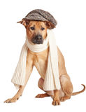 Dog in cap Stock Photo