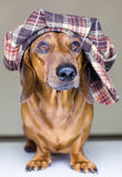 Dog with cap Stock Photography