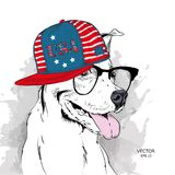 A dog in a cap with an American flag. Vector illustration. A funny dog in a cap with an American flag. Vector illustration Royalty Free Stock Images