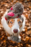Dog  in cap in fallen leaves Stock Photos