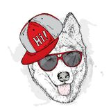 Dog in cap and glasses. Vector illustration. Cute Husky. royalty free illustration