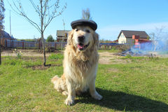 Dog with cap Royalty Free Stock Image